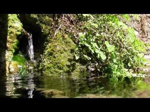 RELAXATION TOTALE ! Ruisseau Oiseaux Fleurs Vent - Etude Méditation Détente - Sommeil Profond - YouTube