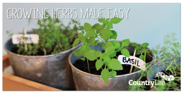 Growing your own herbs is easy as they require very little maintenance. Read Fergal's top tips on growing your own herbs at home... #gardening #tips #countrylife