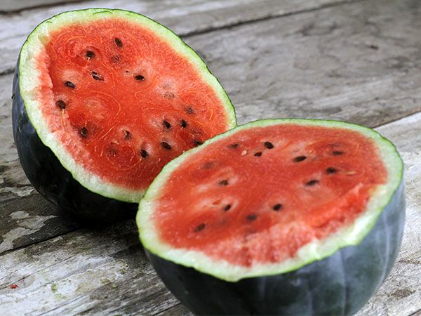 The #1 icebox sized watermelon! Early! 6-10 lb. Sugar Baby's are great for the north and have sweet deep red flesh