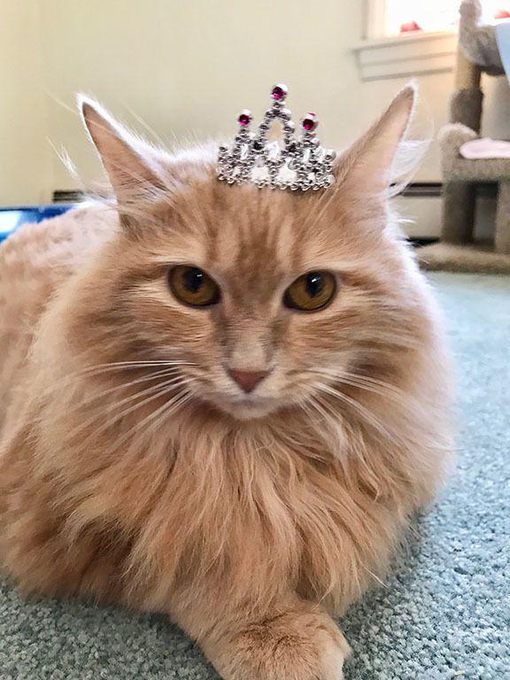 Adopt Hrh Princess Tanji Berry On Petfinder Cat Day Cat Lovers Animal Welfare Society