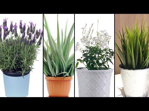 5 Pflanzen, die du in deinem Schlafzimmer haben solltest, um besser schlafen zu können! - YouTube