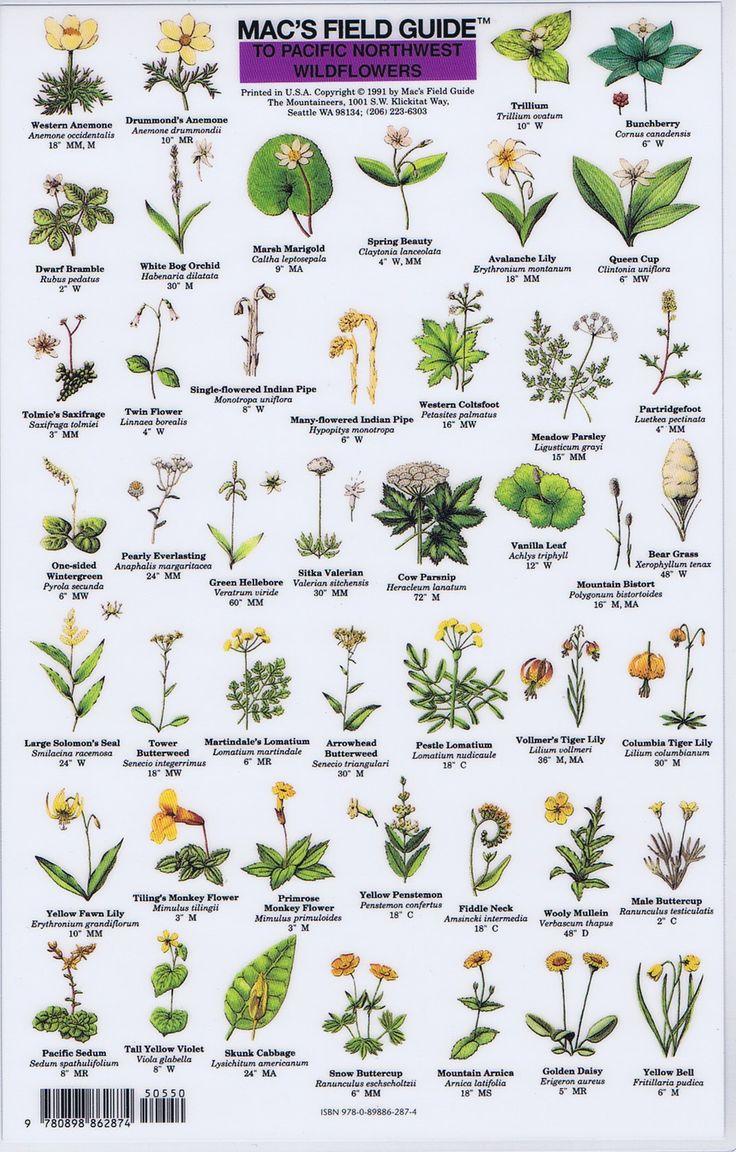 MFG PacNW Wildflowers 1