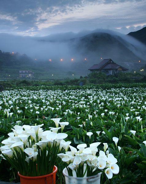 Yangmingshan National Park,Taiwan:
