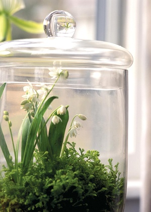 When surrounded by glass, plants almost go on autopilot. They get the humidity they crave in even the driest of rooms. Any plant will shine, such as Scilla siberica 'Alba' in a bed of moss....idea from COUNTRY HOME MAGAZINE