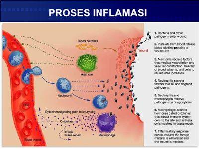 salah satu manfaat kunyit adalah untuk menxegah timbulnya inflamasi atau peradangan.