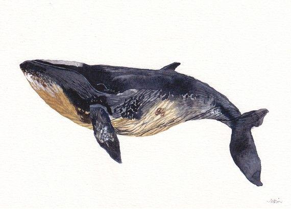 #unitedthread, minke whale print. $15