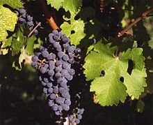 grapes are nice, the wine is divine