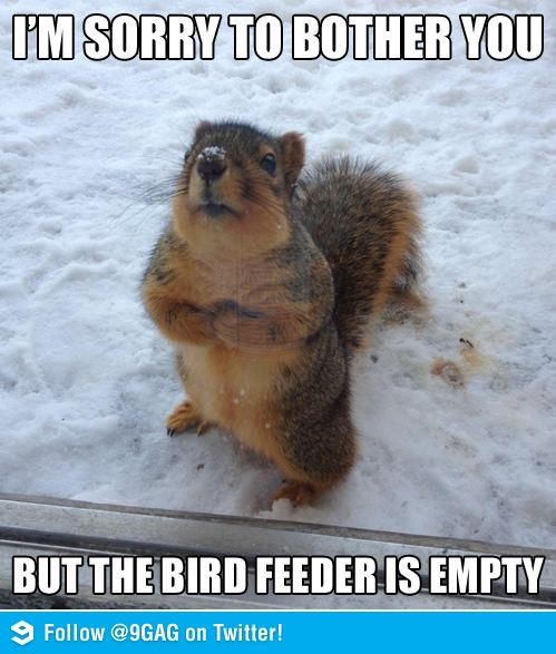 Sorry to bother you but the bird feeder is empty - never found a bird feeder that kept squirrels away