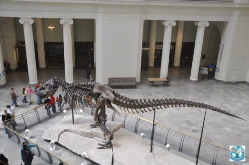 In the Natural History Museum from Chicago, one of the most important and fascinating cities in United States of America, you can see this Tyrannosaurus Rex skeleton