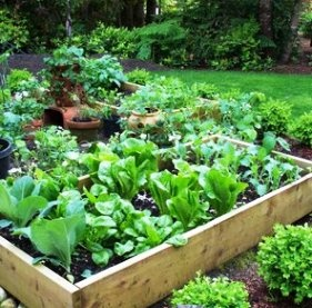 Next project! small vegetable garden