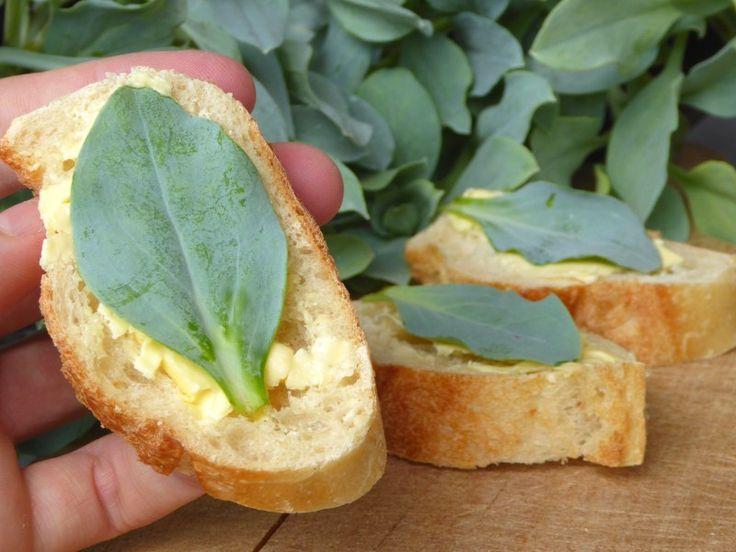 Amuse-bouches huitre plante (1)