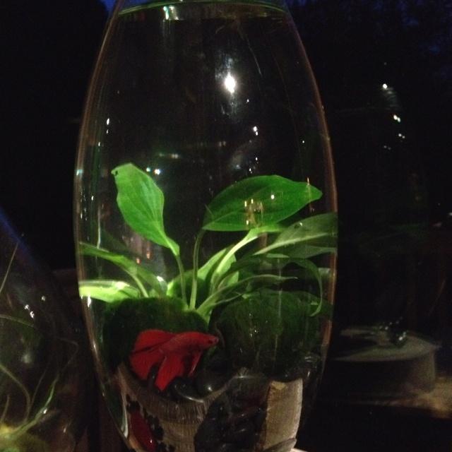 17 best ideas about vase fish tank on pinterest betta for Betta fish mirror