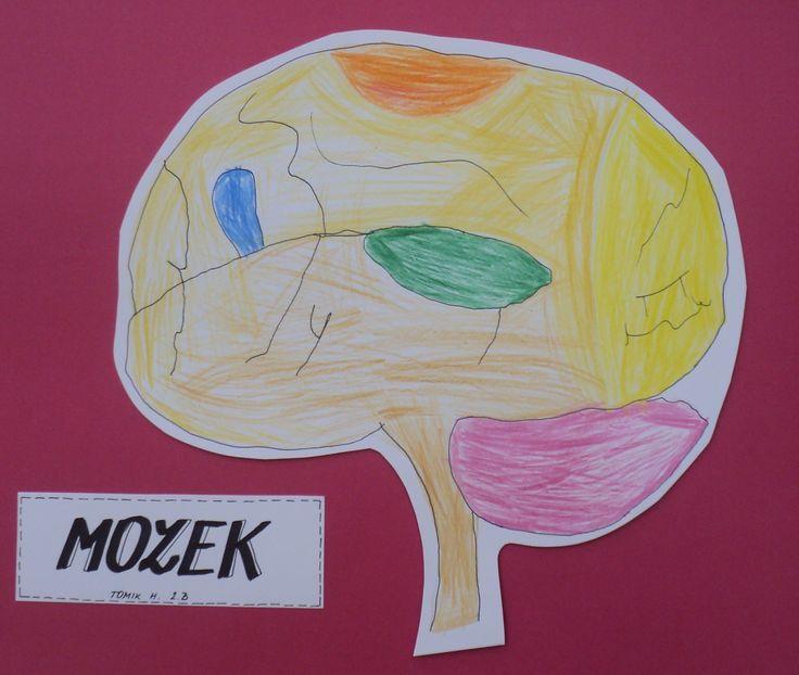 Týden zdraví - Mozek
