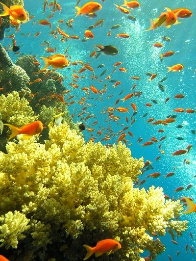 Red Sea Egypt, book a trip to Hurghada, which is located in Red Sea Coast http://www.travel2egypt.org/tours/luxor/ancient-egypt-and-the-red-sea-8422_88/