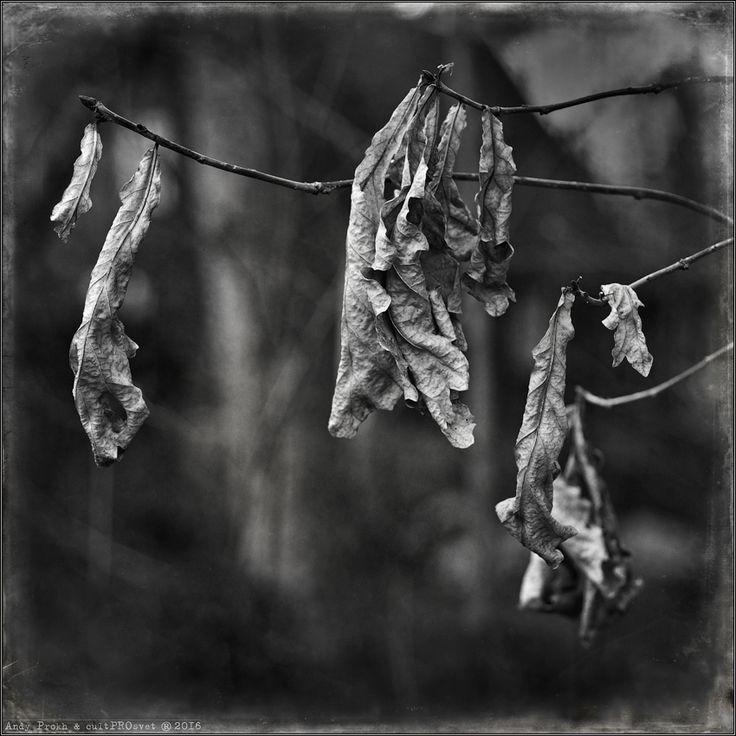 photo: Last Leaves | photographer: Andy Prokh | WWW.PHOTODOM.COM
