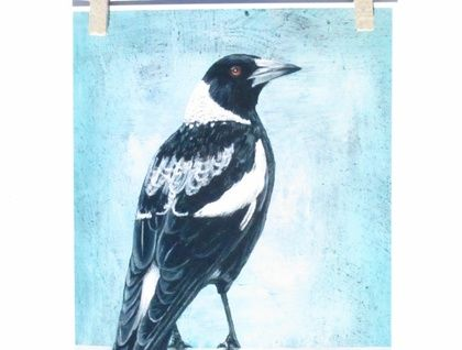 Magpie, print of an original acrylic painting