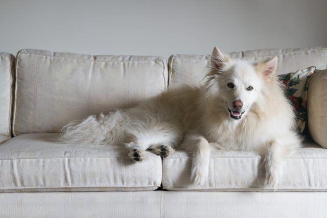 Teppich Hund pinkeln wie sauber