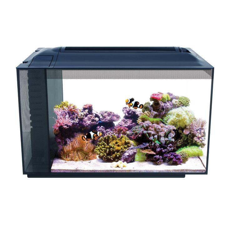 All In One Saltwater Aquarium Kit The 5 Best Starter Packages Of 2019 Aquarium Kit Saltwater Fish Tanks Marine Aquarium