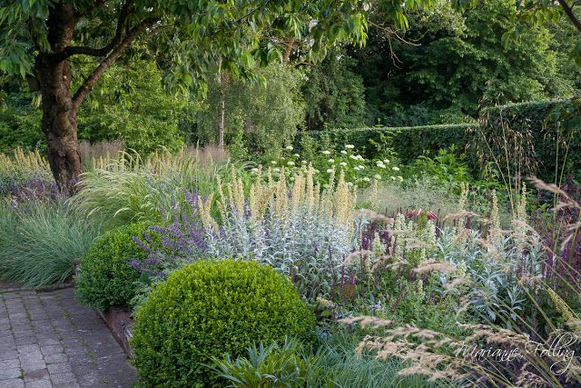 Densely packed border, texture, boxwoods, grasses, lamb's ear.