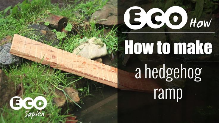 This simple ramp will allow hedgehogs to escape from a pond if they accidentally fall in. Although hedgehogs are good swimmers, if the sides of a pond are to...