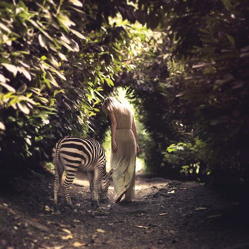 Wild Zebra spotted...or should that be striped?