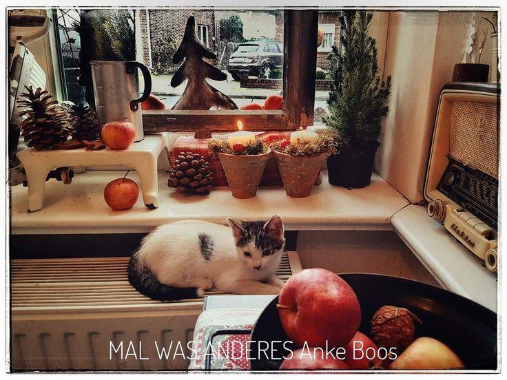 Vorweihnachtliche Gemütlichkeit in der Küche - #gemütlich #winter #Shabbychic #Weihnachtsdeko #bullerbü #scandic #Winterdeko #Weihnachten #Christmas #xmas #Katze #fenster #Malwasanderes