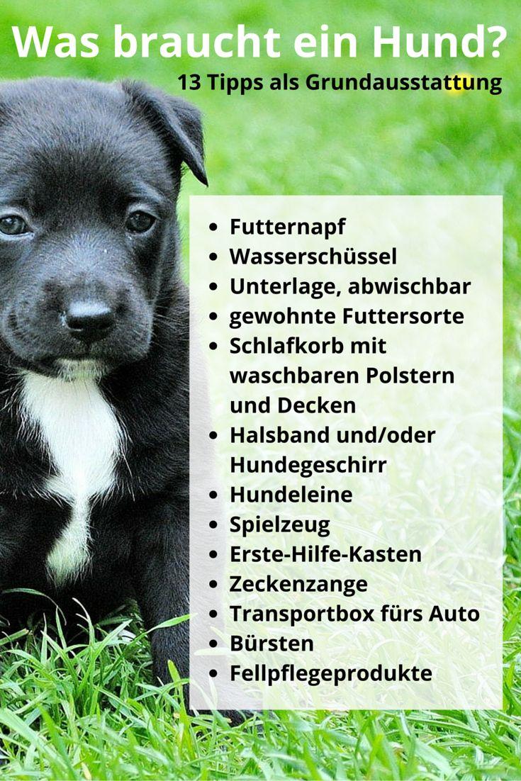 Was braucht ein Hund? 13 Tipps zur Grundausstattung, vom Futternapf bis zur Zeckenzange