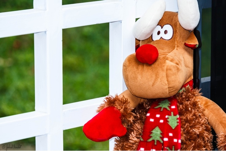 Rudolph the red nosed reindeer   Cool portraits   Pinterest   Photos ...