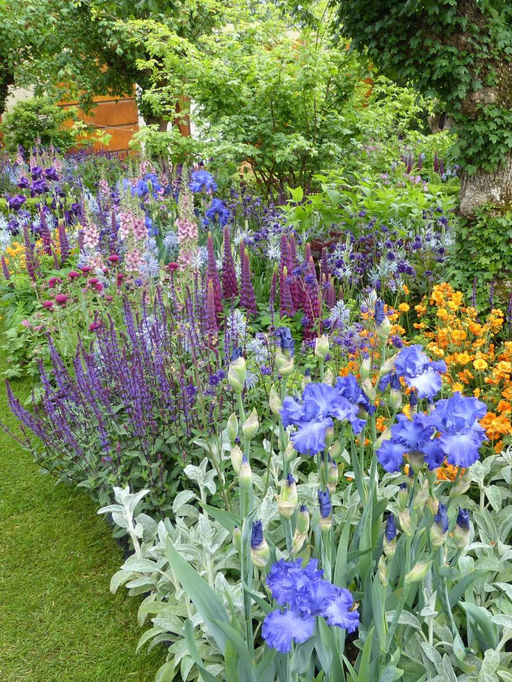 Rich border with blue iris, purple lupins and salvias and orange geum