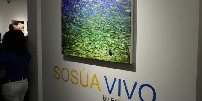 Un photographe canadien capture la beauté des fonds marins à Sosua