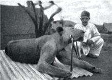 Tsavo Man-Eaters - Wikipedia, the free encyclopedia
