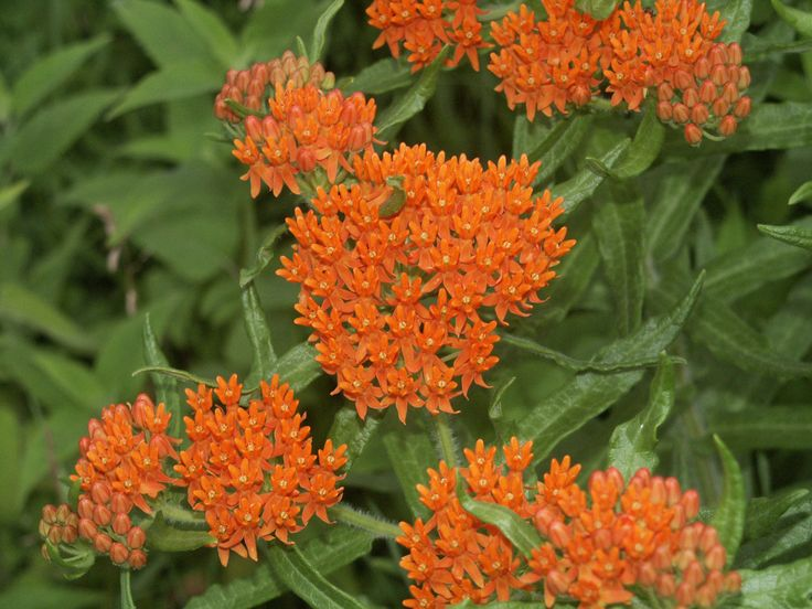 080 Flowers Orange