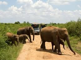 Udawalawe Safari Lakpura Travels offers various type of sri lanka tours and holiday packages for an affordable price, with professional & reliable service. https://www.lanka.com/about/attractions/udawalawe-national-park/