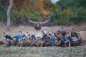 Safarious - Zambia - Lower Zambezi and South Luangwa / Michael Lorentz / Gallery