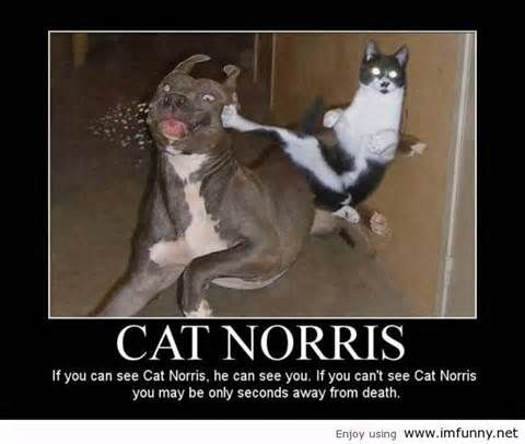 Funny+Cat+Pictures+with+Captions | Funny Pictures Cats With Captions The Carefree Cat - Doblelol.com