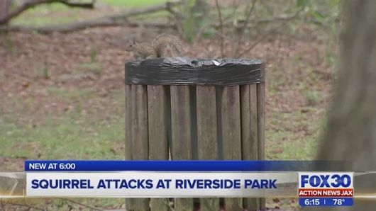 Young boy among 3 attacked by squirrels at Jacksonville park