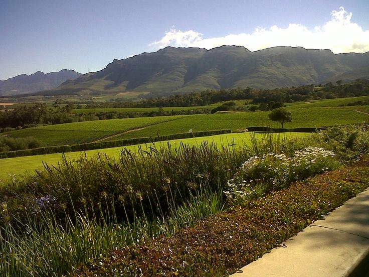 Ernie Els Wine Farm , Stellenbosch
