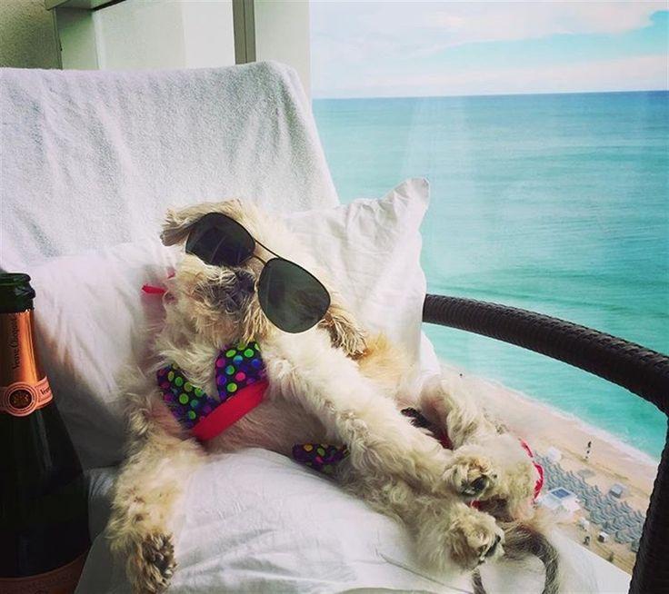 Champagne, viaggi in jet privato, pool party e vacanze sullo yacht. Altro che…