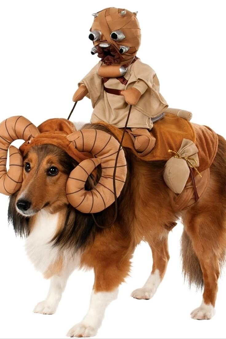 16 best Dog Halloween Costumes images on Pinterest
