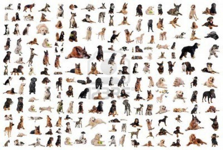 Origen e historia de las razas de perro.