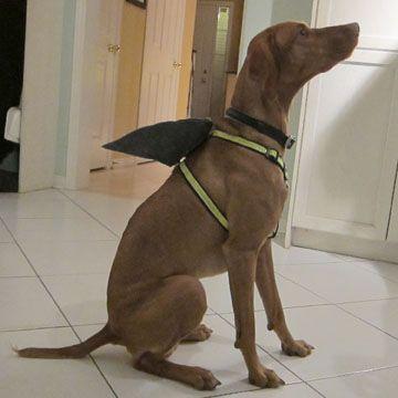 DIY Shark Fin Dog Harness