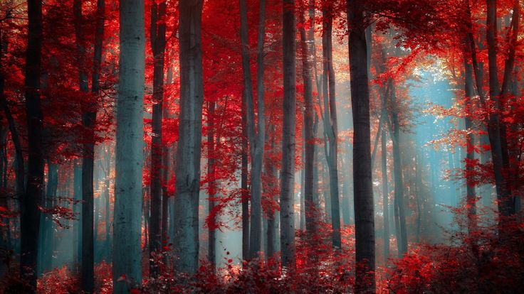 Forest: Red Autumn Forest Colorful Beije Amazing Branches Sunrise ...