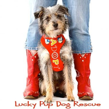 Lucky Pup Dog Rescue  http://www.luckypupdogrescue.com/