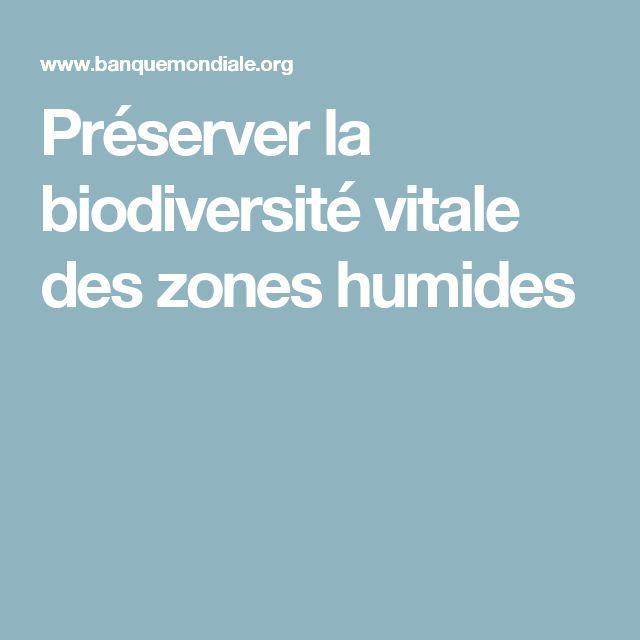 Préserver la biodiversité vitale des zones humides