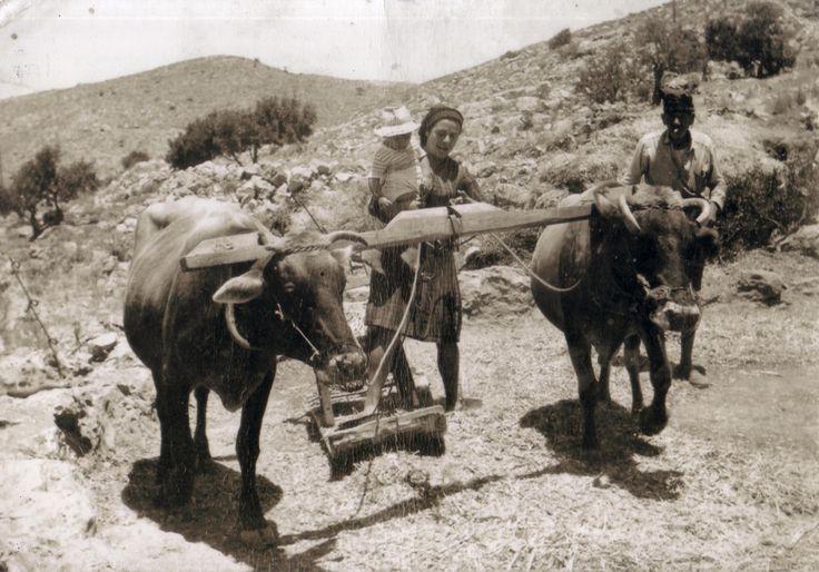 ΘΥΜΑΜΑΙ...Τον παλιό καιρό..που Αλωνίζαν στο χωριό ...!!!!!!