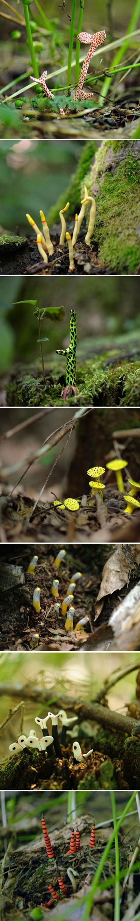 """creatures from VERA MOLLER from """" the jealous curator : Wouldn't it be amazing, and quite frankly kinda magical, to find a few of these little things """"growing"""" on the forest floor while out for a morning stroll…""""   YES it would !"""