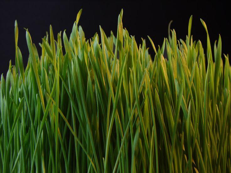 Haiku: Watch A Blade Of Grass... | BlogHer