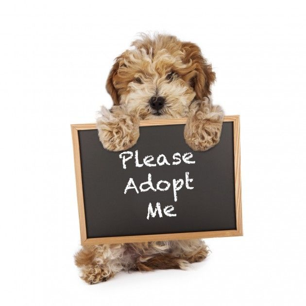 Always Consider Adopting Dogs They Are Also A Family Dog Adoption Dog Walking Quotes Pet Adoption