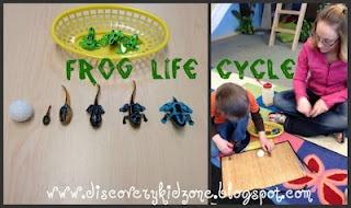 Frog Theme Preschool science