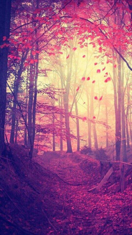 las 25 mejores ideas sobre fondo de pantalla de bosque en